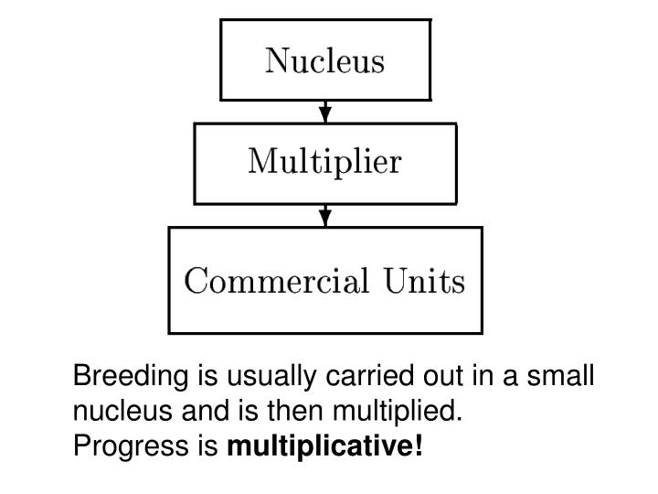 Breeding is usually carried out in a small nucleus and is then multiplied.