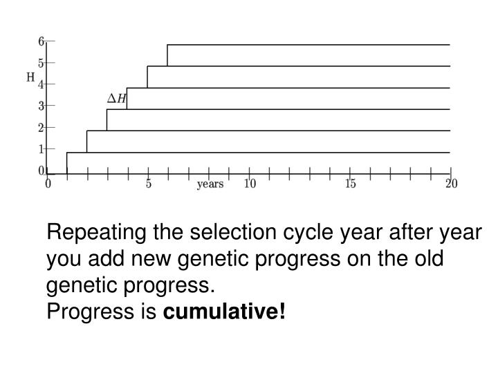 Repeating the selection cycle year after year you add new genetic progress on the old genetic progress.