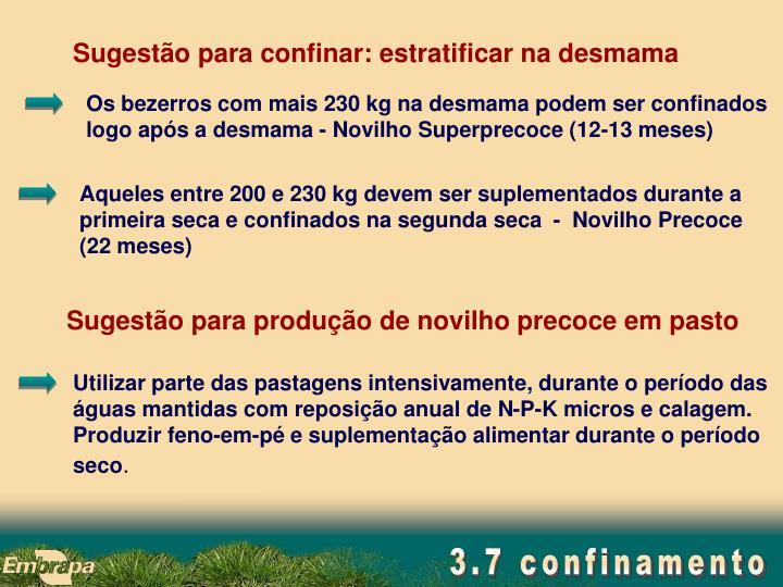 Os bezerros com mais 230 kg na desmama podem ser confinados