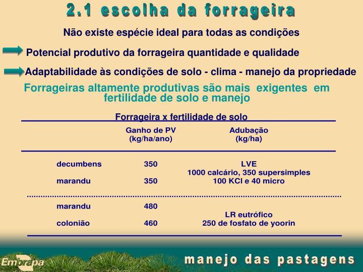 Potencial produtivo da forrageira quantidade e qualidade