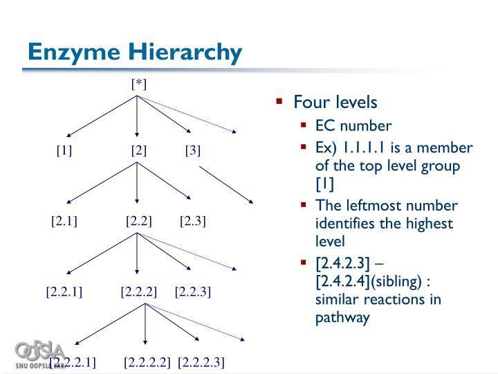 Enzyme Hierarchy