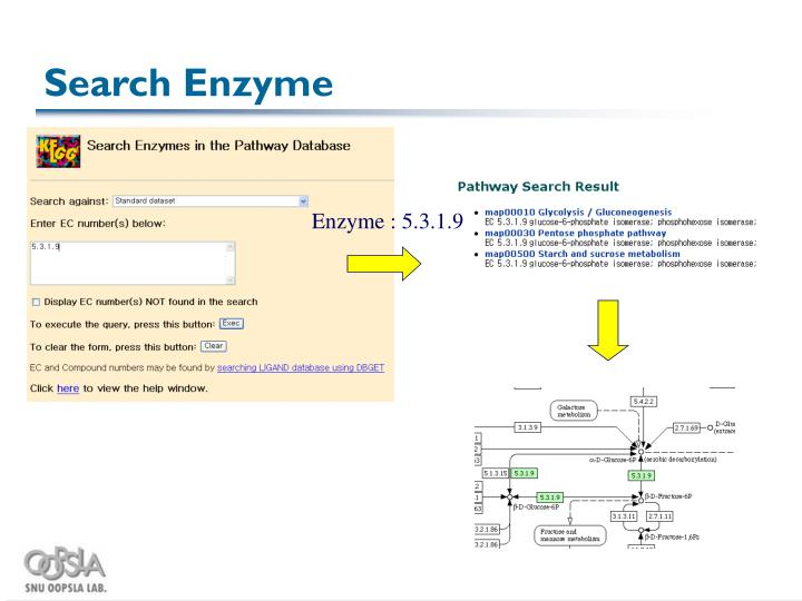 Search Enzyme