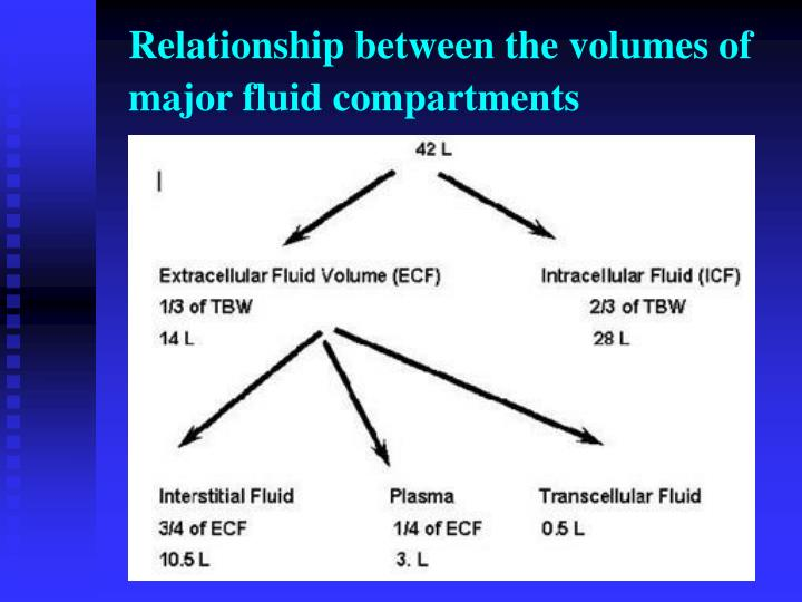 Relationship between the volumes of major fluid compartments