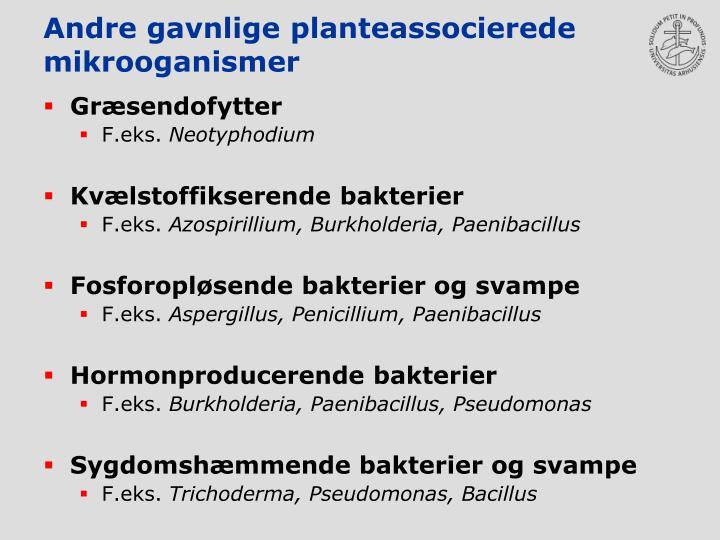 Andre gavnlige planteassocierede  mikrooganismer