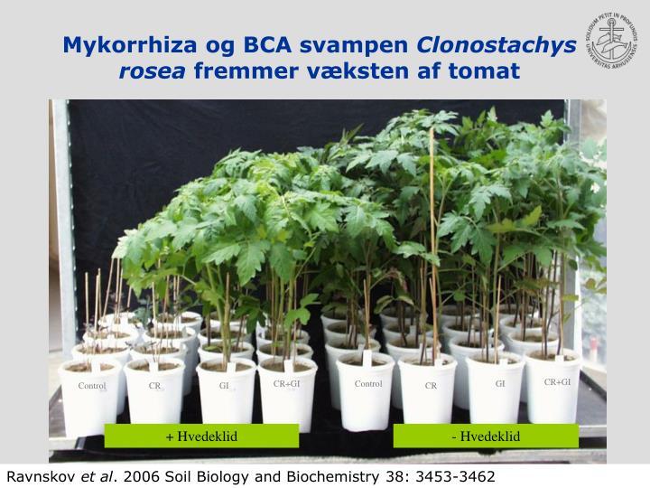 Mykorrhiza og BCA svampen
