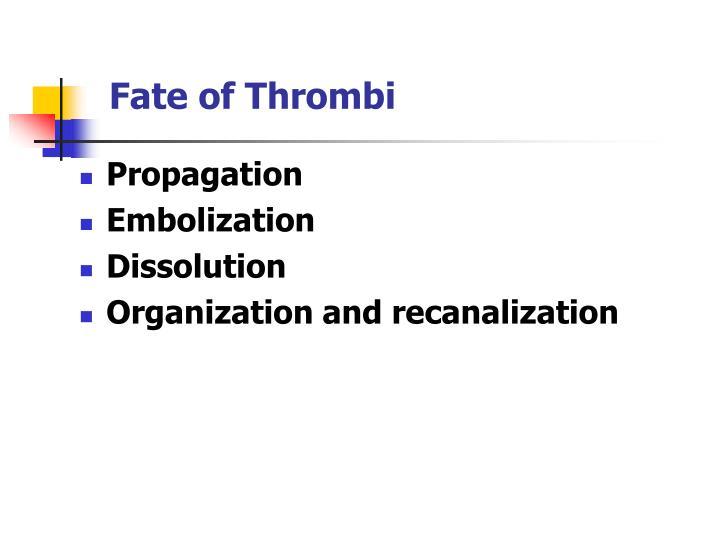Fate of Thrombi