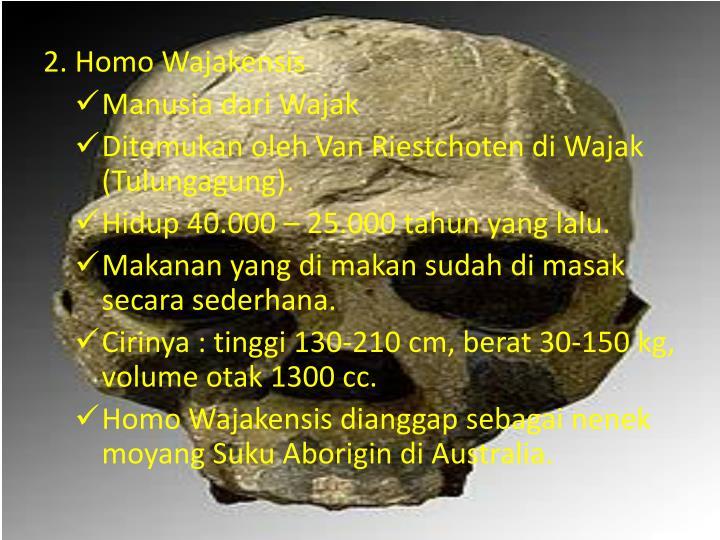 2. Homo Wajakensis