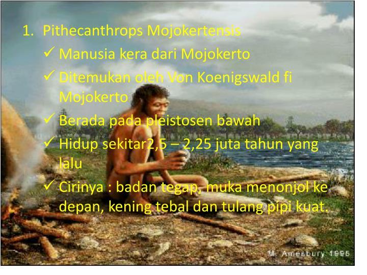 Pithecanthrops Mojokertensis