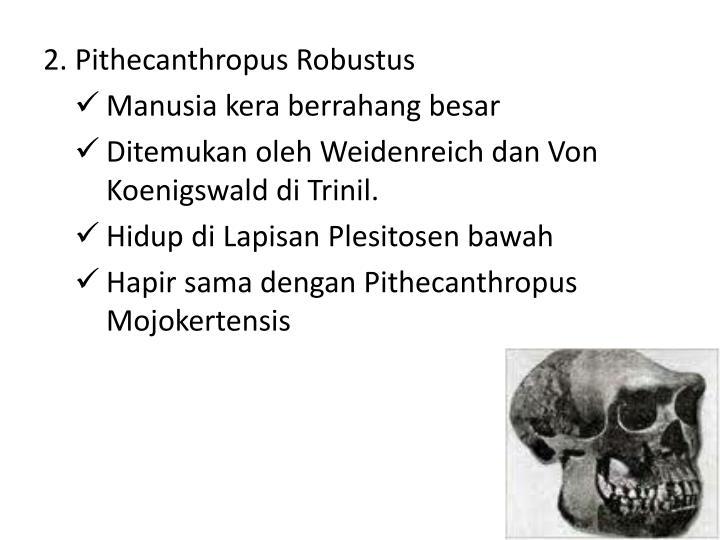 2. Pithecanthropus Robustus
