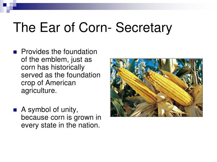 The Ear of Corn- Secretary