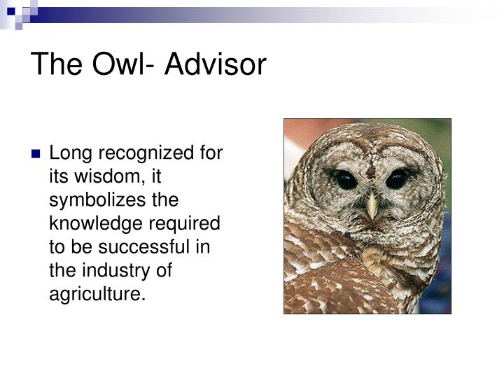 The Owl- Advisor