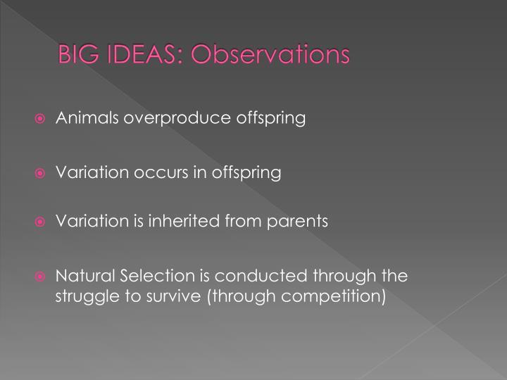 BIG IDEAS: Observations