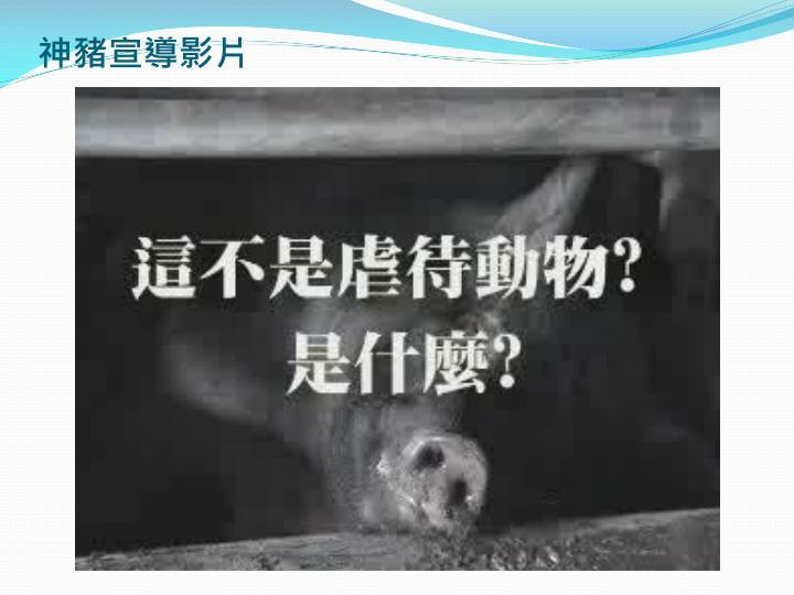 神豬宣導影片