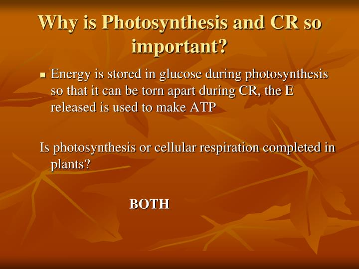 is photosythesis important What is photosynthesis process by which plants use the suns energy, water and carbon dioxide and turn it into sugar (glucose) why is photosynthesis important to you and all living things.