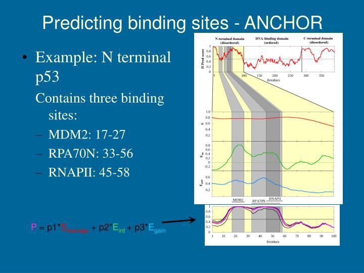 Predicting binding sites - ANCHOR