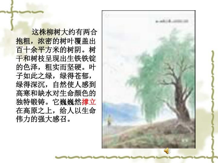 这株柳树大约有两合抱粗,浓密的树叶覆盖出百十余平方米的树阴。树干和树枝呈现出生铁铁锭的色泽,粗实而坚硬。叶子如此之绿,绿得苍郁,绿得深沉,自然使人感到高寒和缺水对生命颜色的独特锻铸。它巍巍然