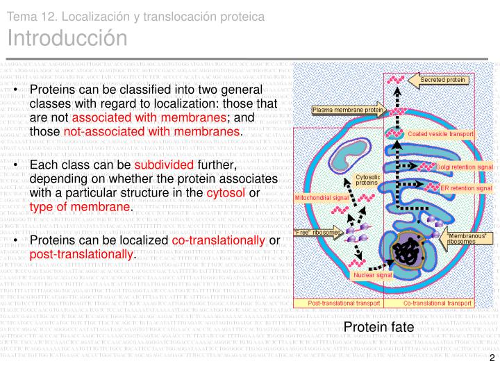 Proteins can be classified into two general classes with regard to localization: those that are not