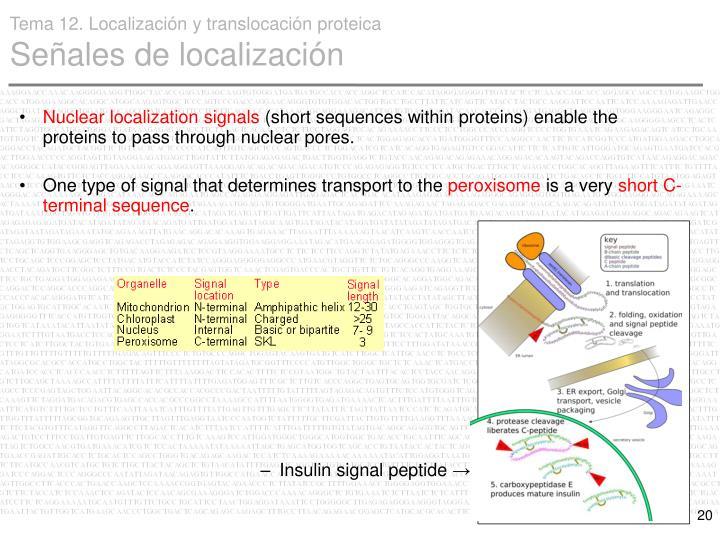 Nuclear localization signals