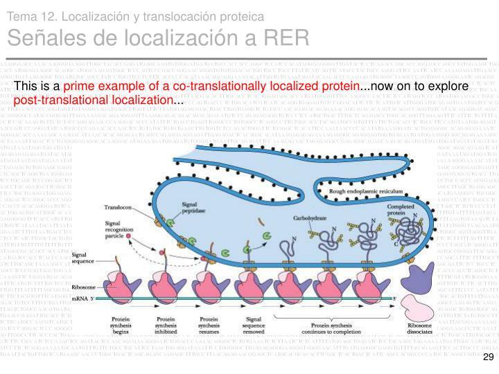 Tema 12. Localización y translocación proteica