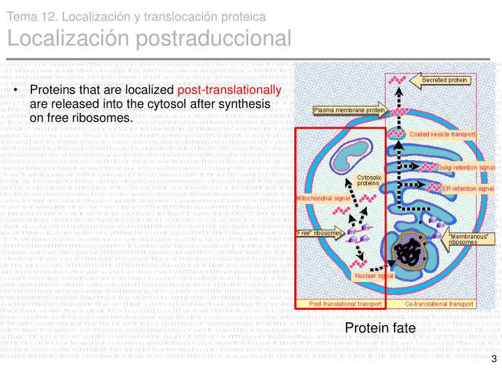 Proteins that are localized