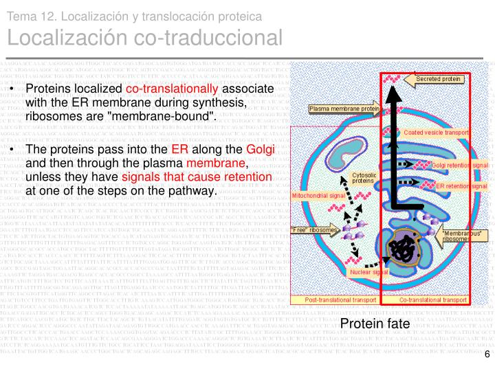 Proteins localized
