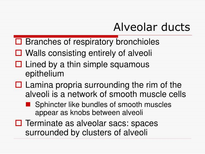 Alveolar ducts