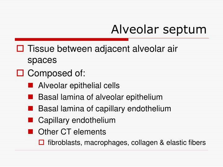 Alveolar septum