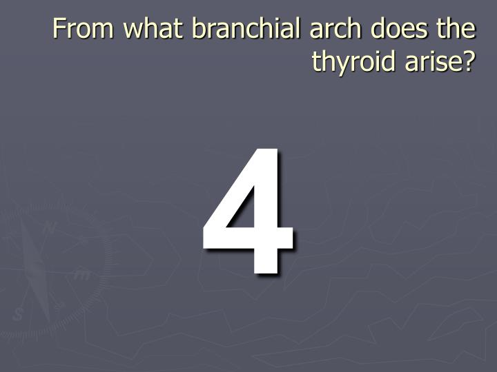 From what branchial arch does the thyroid arise?
