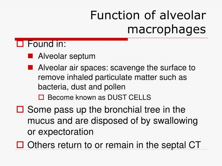 Function of alveolar macrophages