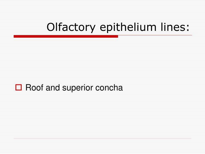 Olfactory epithelium lines: