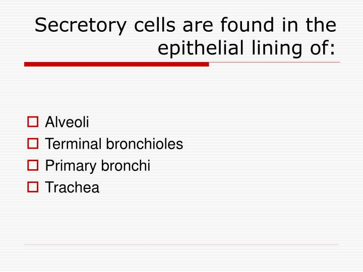 Secretory cells are found in the epithelial lining of: