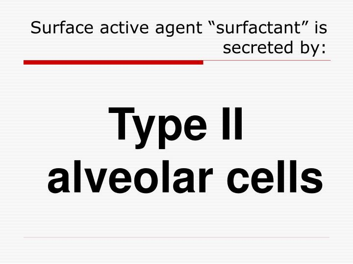 "Surface active agent ""surfactant"" is secreted by:"