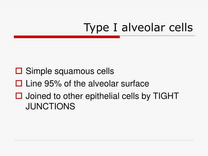 Type I alveolar cells