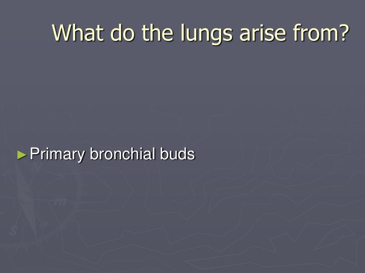 What do the lungs arise from?