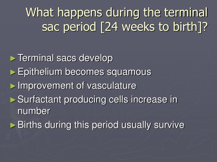 What happens during the terminal sac period [24 weeks to birth]?