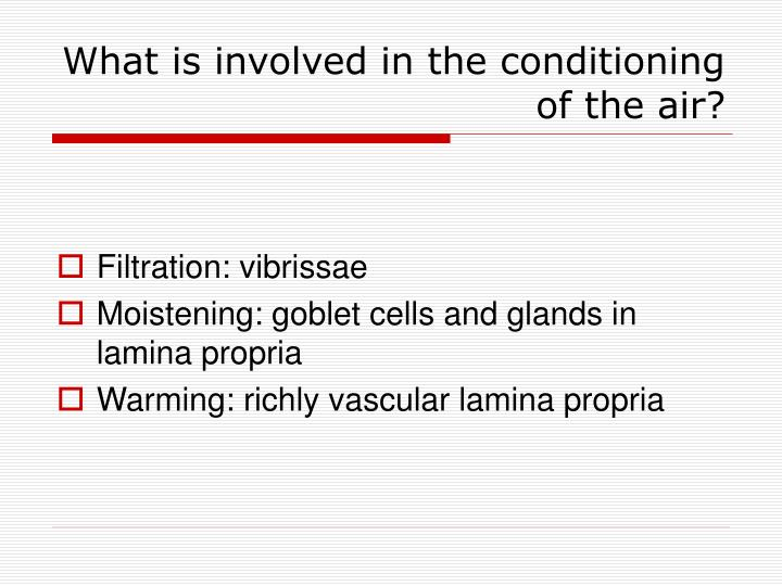 What is involved in the conditioning of the air?