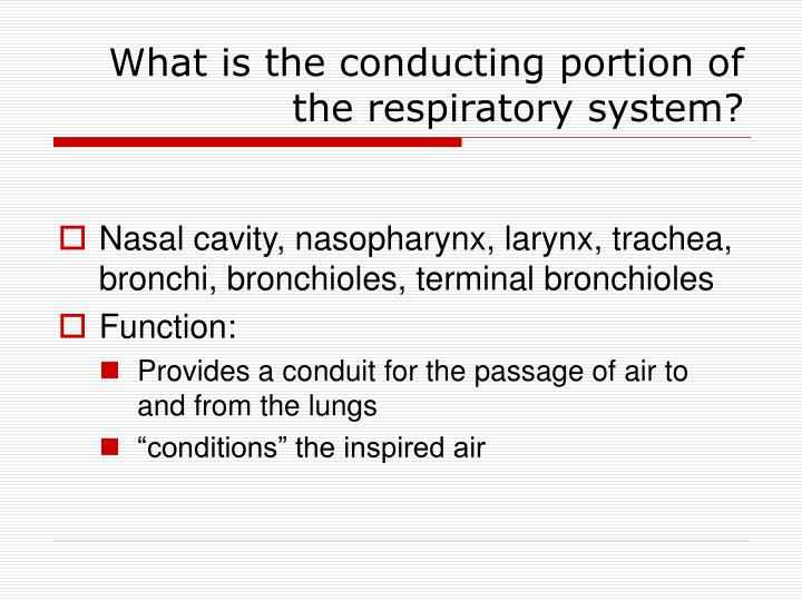 What is the conducting portion of the respiratory system?