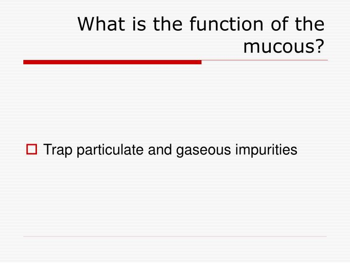 What is the function of the mucous?
