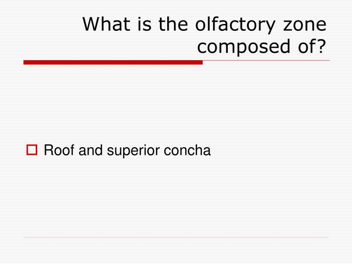What is the olfactory zone composed of?