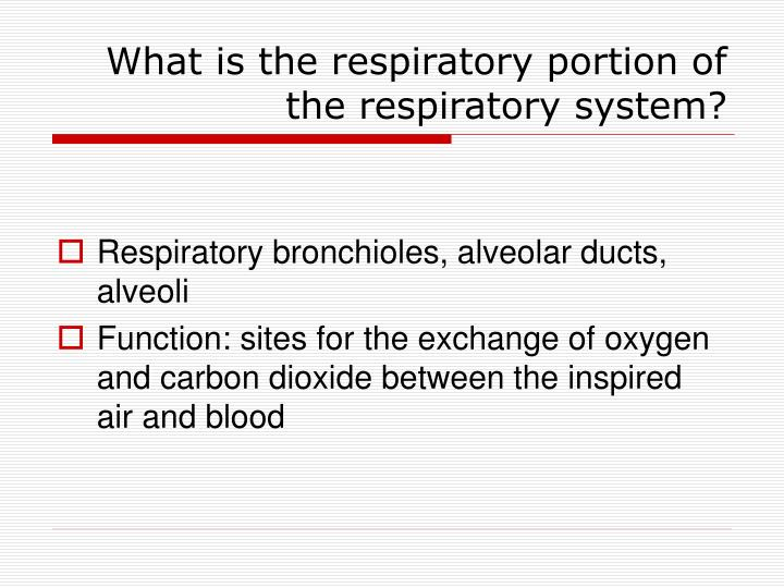 What is the respiratory portion of the respiratory system?