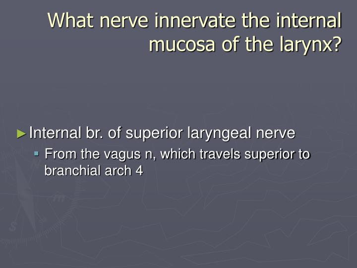 What nerve innervate the internal mucosa of the larynx?