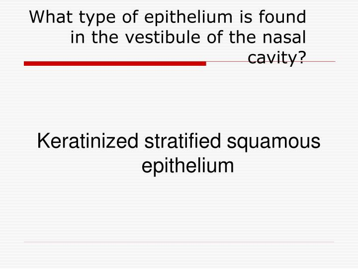 What type of epithelium is found in the vestibule of the nasal cavity?