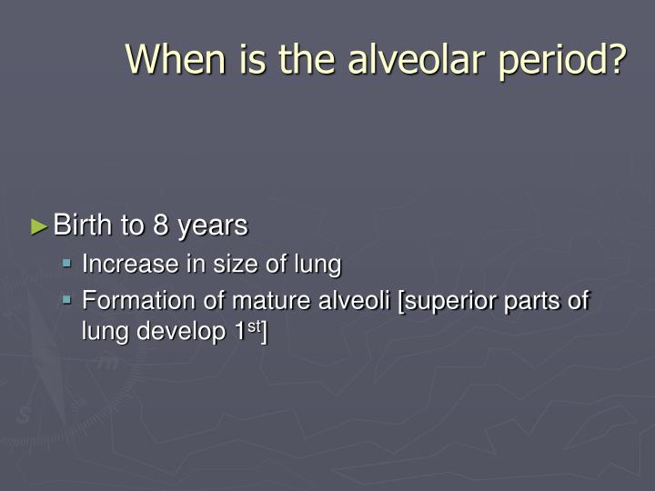When is the alveolar period?