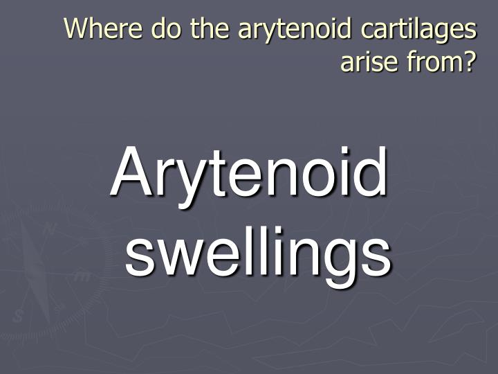 Where do the arytenoid cartilages arise from?