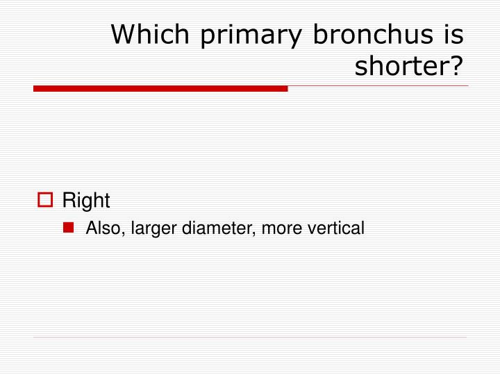 Which primary bronchus is shorter?