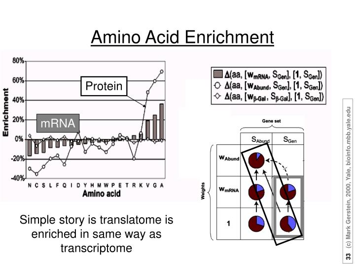 Amino Acid Enrichment