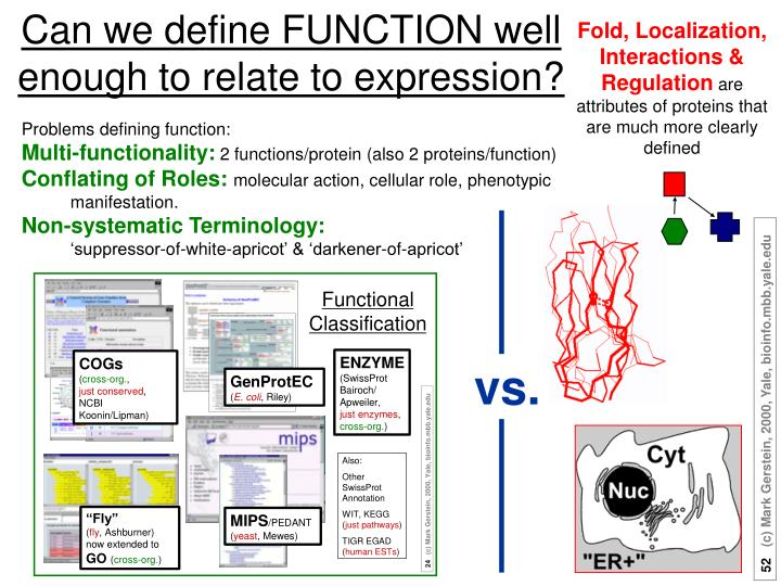 Fold, Localization, Interactions & Regulation