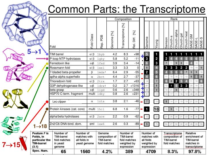 Common Parts: the Transcriptome