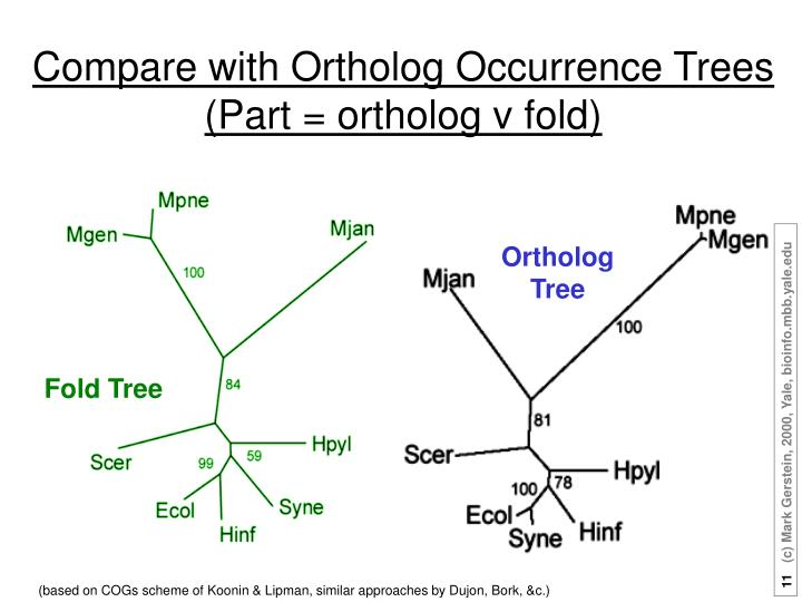 Compare with Ortholog Occurrence Trees