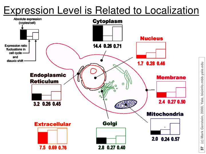 Expression Level is Related to Localization